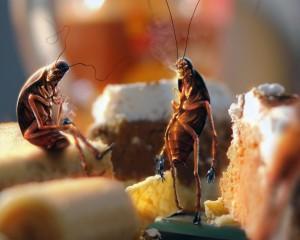 Продавец могилёвского магазина лишилась работы из-за таракана
